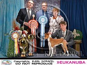 dogs breeders dog pictures